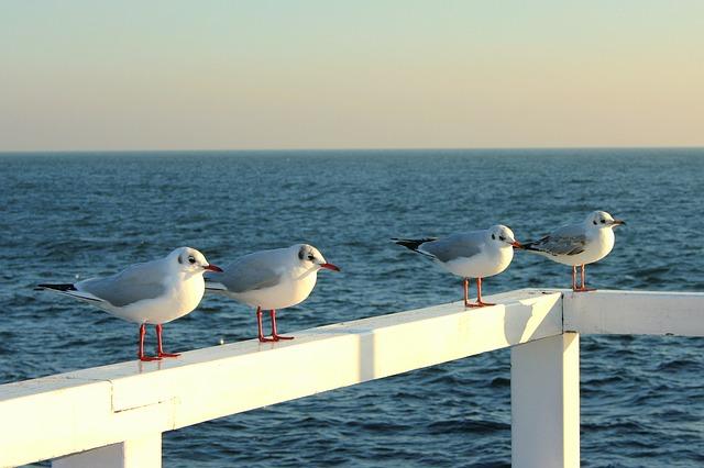 V Pomorski Kongres Obywatelski