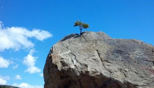 Wiara w rozwój czyni cuda