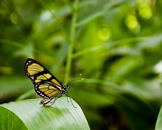 butterfly-404731_640